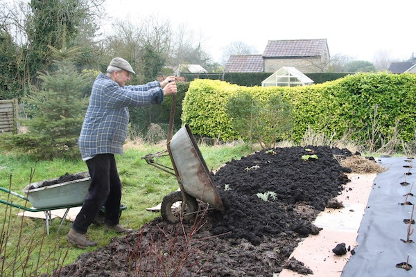 I am spreading finer bought compost on the old manure, creating a new no dig bed