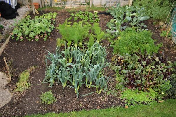 Small garden still has many harvests