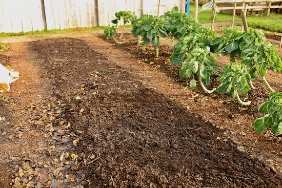 Beds composted, paths mulched wood