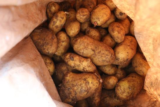 Potatoes stored seven months already