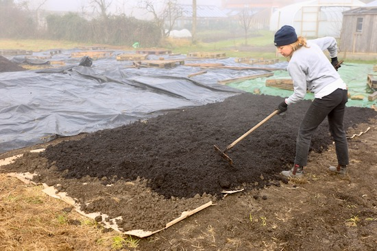 Green waste compost which Kate is raking more or less level