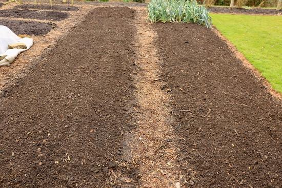 Lightly raked to disturb tiny weed seedlings