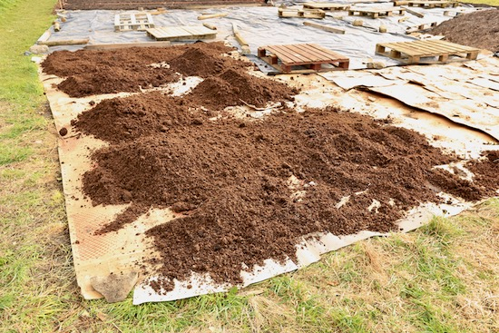 Cardboard with compost over