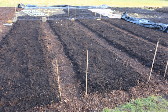 New beds could be planted now, or wait