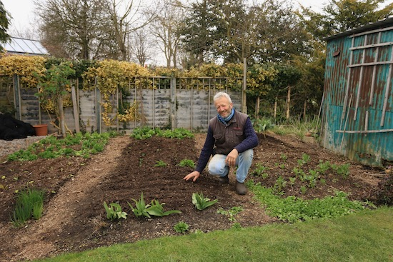 Beside a new carrot sowing in the small garden