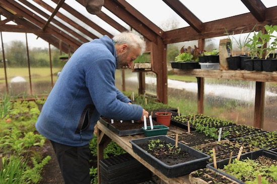 Sowing tomatoes 16th March