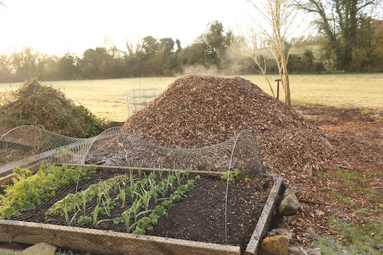 Recently delivered and still steaming pile of woodchip