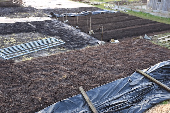 A mix of mulches includes a bed covered with old woodchip