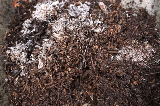 Year old wood has lovely mycelial threads