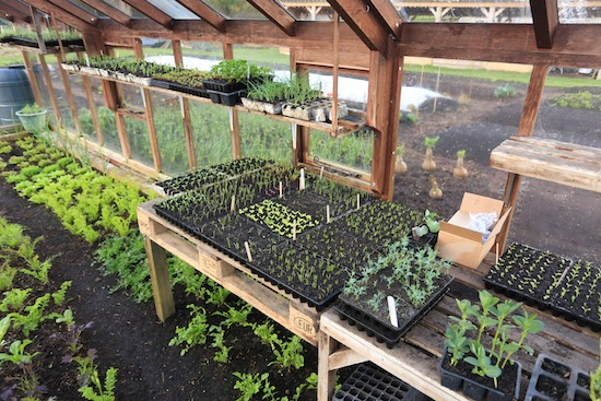 Seedling propagation on pallets stacked over salad plants