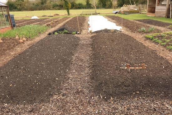 Trial beds, dig left and no dig right, same amount of compost