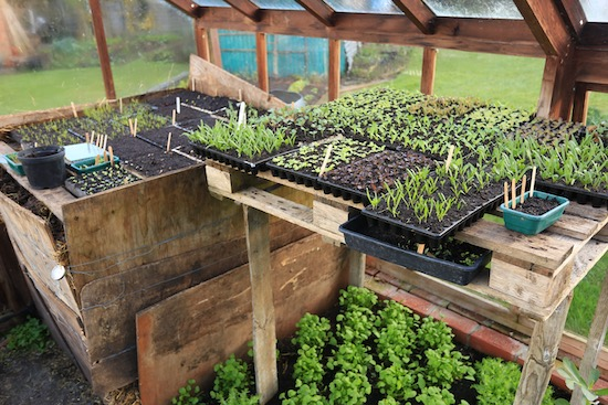 Hotbed for propagation and seedlings