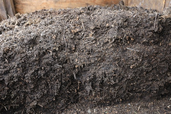 Homemade compost which we are spreading now, is seven months old and turned in December