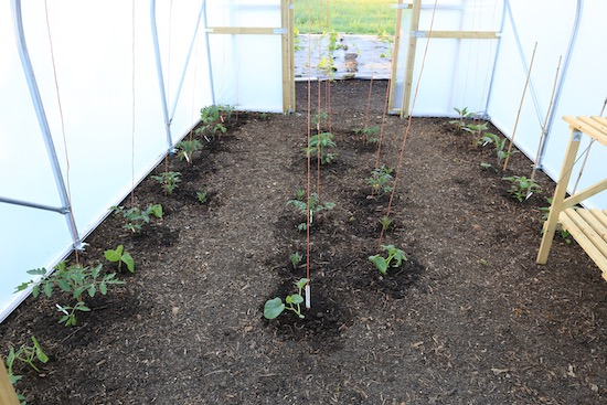 29th May, and it will be fascinating to compare growth here with my existing polytunnel