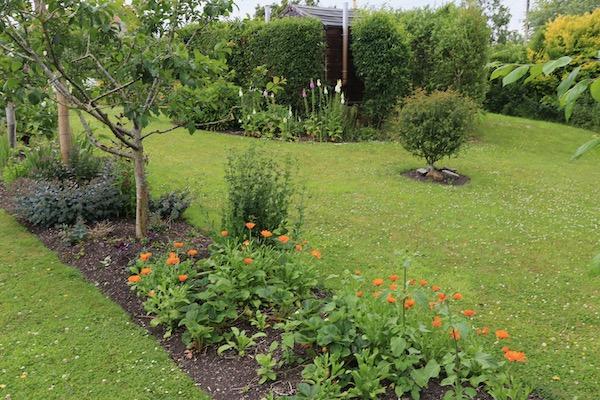 No dig flower garden at Homeacres in June
