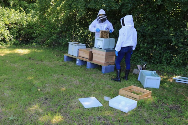Moving bees into their permanent home, National hives