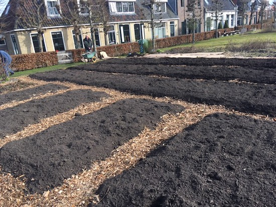 Beds and paths prepared, no dig