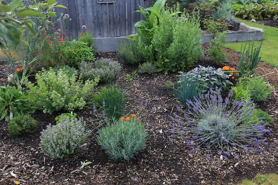 26th July, the herb garden in midsummer