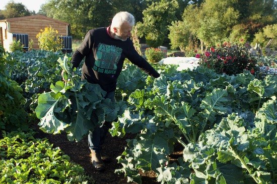 Charles removing broccoli lower leaves