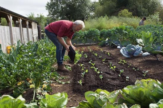 transplanting spring cabbage autumn equinox