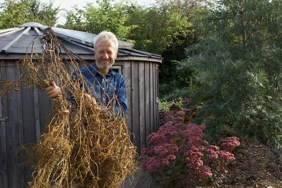 Charles with one beetroot plant for seed